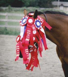 Award-winning-horse