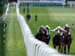 Furlong marked by poles along track
