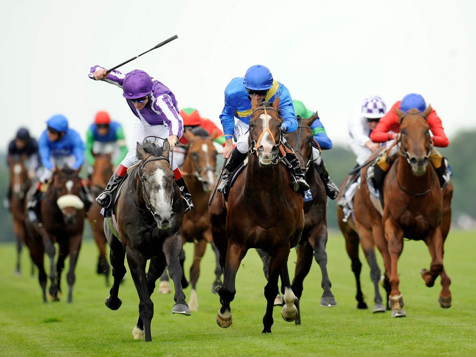 How To Bet On Horses Uk