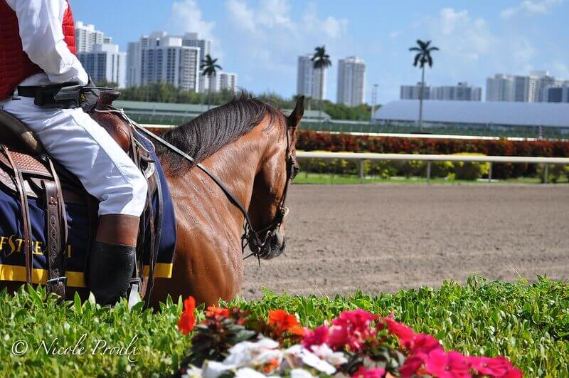 pegasus world cup entries